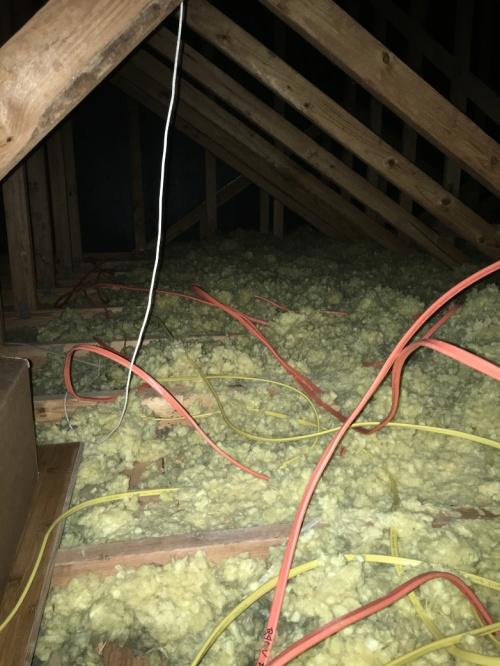 Rats Nest-Web